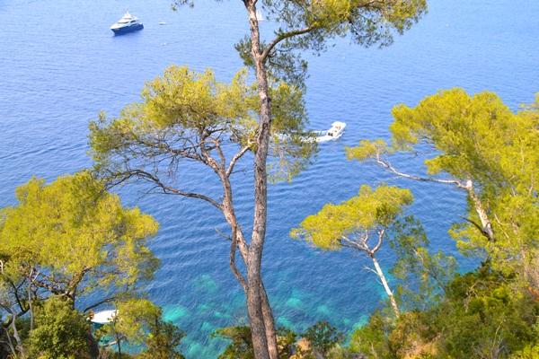 Pin près de la Méditerranée
