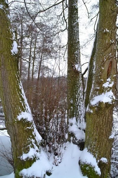 Tronc sous la neige